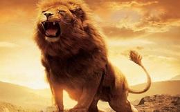 Phát triển thương hiệu: Sư tử gầm ở đâu?