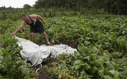 Nghi án hành khách MH17 đã chết trước khi cất cánh