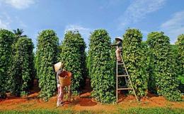 Phát triển Phú Quốc: Để đảo ngọc không chỉ là mảnh đất tiềm năng
