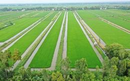 """""""Cú hích"""" ST và nỗ lực xây dựng thương hiệu gạo Việt"""