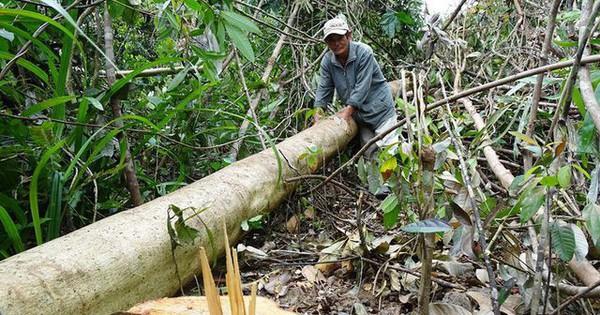 Nhiều dự án xẻ thịt đất rừng trái phép tại Phú Yên