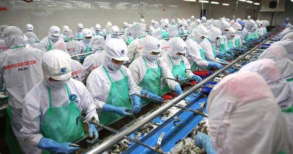 Thuỷ sản Minh Phú (MPC): Quý 1 lãi hợp nhất 55 tỷ đồng giảm 32% so với cùng kỳ