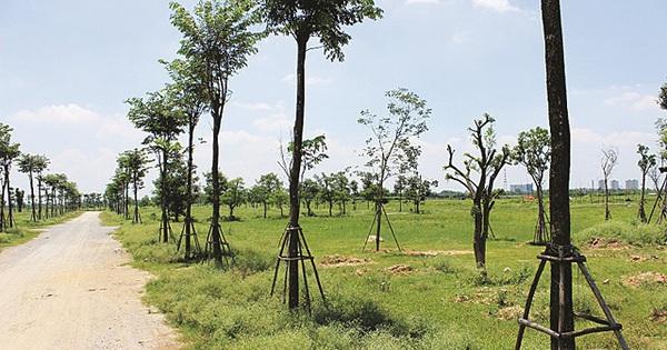 HoREA hoan nghênh Bộ Tài nguyên Môi trường sửa đổi Dự thảo nghị định mới, cho phép phân lô bán nền tại các quận ngoại thành Hà Nội, TPHCM