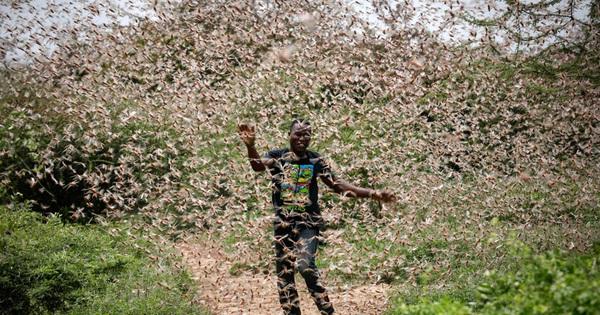 Chùm ảnh rợn người về đại dịch châu chấu đang hoành hành ở châu Phi: ''Binh đoàn'' nghìn tỷ con châu chấu với sức ăn bằng 35.000 người/ngày bay kín trời