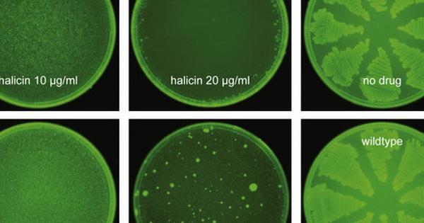 Trí tuệ nhân tạo vừa giúp các nhà khoa học tìm ra một loại ''kháng sinh mạnh nhất'' từ trước đến nay