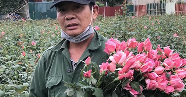 """Làng hoa lớn nhất Hà Nội ủ rũ vì Covid-19: """"Chắc phải bán đất để bù lỗ"""
