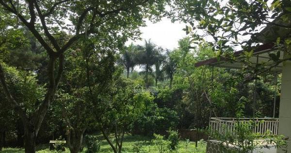 ''Bỏ phố về quê'' làm nhà vườn, chưa kịp hưởng lại rao bán gấp, cho mượn miễn phí