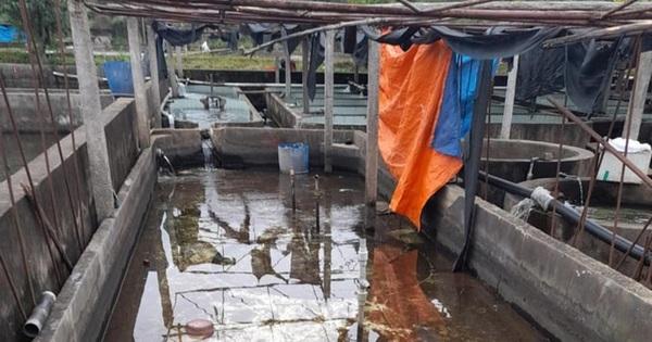 Nguy cơ ngành nuôi cá tầm chết yểu