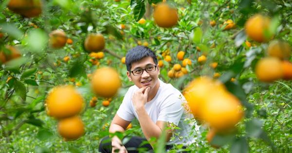 Chàng ''công tử đất Hà thành'' bỏ phố lên núi làm chủ 3 quả đồi trồng cam, mỗi năm kiếm cả tỷ bỏ túi nhưng cũng bị ''vùi dập'' đến tơi bời