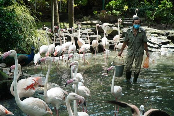 Cận cảnh Thảo Cầm Viên Sài Gòn sau nhiều tháng đóng cửa