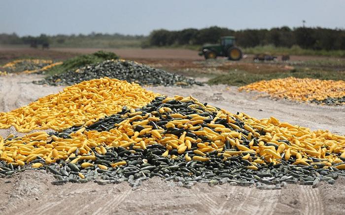 Khủng hoảng thực phẩm: Kẻ thừa đổ bỏ, người thiếu đi săn