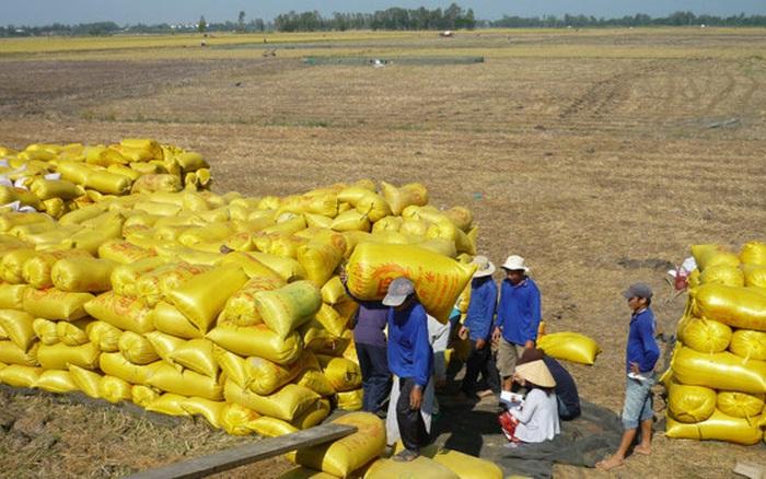 Nguồn cung thấp đẩy giá gạo xuất khẩu lên cao nhất 2 năm