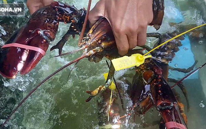 """Chen chân mua hải sản giảm """"sốc"""" 50%, tôm hùm 640.000 đồng⁄kg, ghẹ xanh 500.000 đồng⁄kg"""