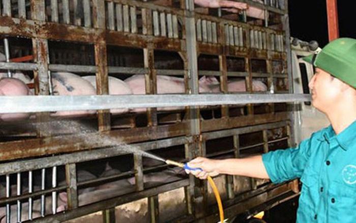 Dự kiến nhập khẩu 1,9 triệu heo thịt Thái Lan