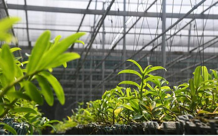 Phất lên nhanh chóng nhờ trồng loài hoa vương giả - kết quả xổ số kon tum