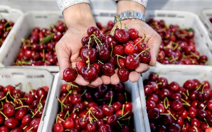 Người tiêu dùng Trung Quốc thờ ơ với trái cây nhập khẩu