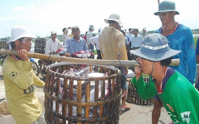 Nhiều chông gai cho xuất khẩu cá tra