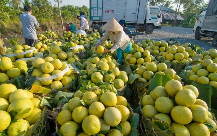 Trái cây Tết ĐBSCL giảm giá mạnh