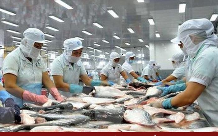 Xuất khẩu cá tra hồi phục nhưng nguồn cung chưa đáp ứng kịp thời