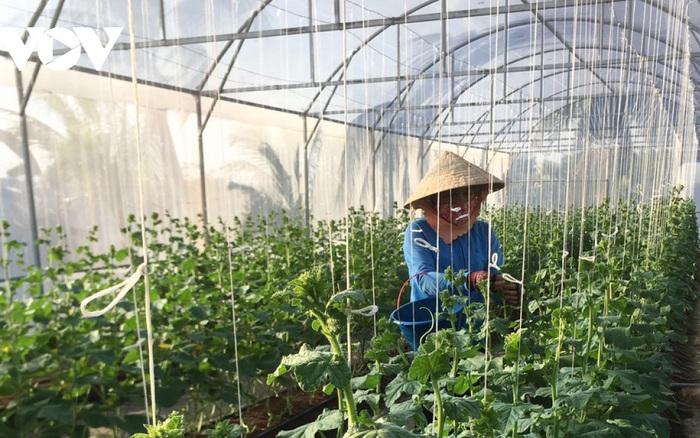 Thanh niên 9X thu tiền tỷ từ mô hình nông nghiệp sạch