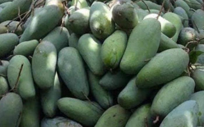 Nông sản rớt giá, nông dân miền Tây 'khóc thét' vì giá xoài, mít chỉ còn 2.000 - 3.000 đồng/kg