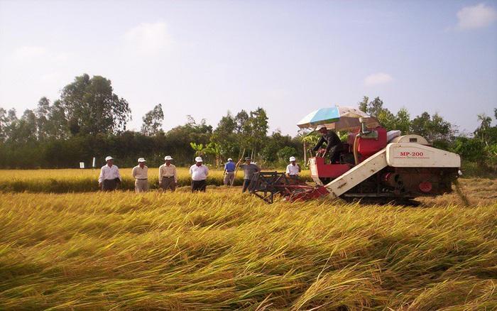 """Nghẽn đầu ra, nông dân sẽ bị """"đè"""" giá lúa"""